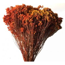 Broom Bloom - Autumn - Approx 4 oz