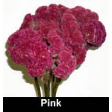 Celosia (Coxcomb) - 4oz - Rose/Pink - By the bunch