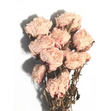 Peonies - CREAM ONLY - Natural - By the Bunch - ON SPECIAL
