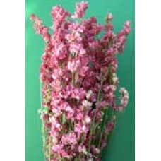 Larkspur - Natural - 4 oz - Pink/Carmine - New Harvest