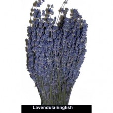 Lavendula - English - Premium-Natural Purple - 3-4 oz Bunch - Bunches Only - Cases Sold Out