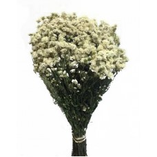 Achillea The Pearl - Natural White- New Harvest