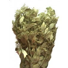 Seeded Eucalyptus - Chartreuse - 1 lb - Preserved