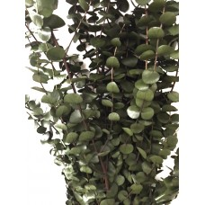 Eucalyptus Baby - Perfect Green/Basil-8oz - Bunches & Cases Available