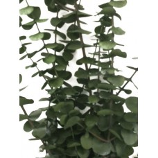 Eucalyptus-Perfect Green- 4oz-Preserved (Bunches Only)- NEW!