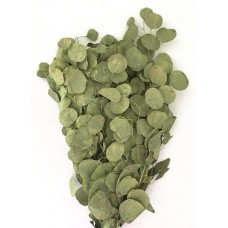 Silver Dollar Eucalyptus-Pastel Chartreuse-1 lb - 4 available-more In about 3 weeks