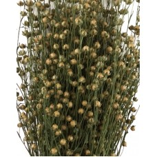 Flax (Linum) - Natural Golden/Green-New Harvest