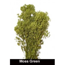 Sesame Bloom - Moss Green - Preserved - 16 bunches available