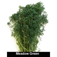 Sesame Bloom - Meadow Green - Preserved - Approx 4oz