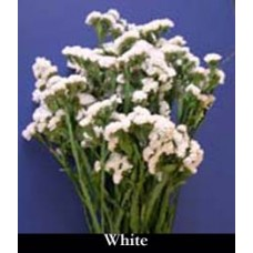 Sinuata Statice - White - Preserved - 4oz