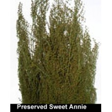 Sweet Annie - Preserved - 4 oz
