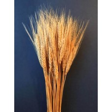 Wheat - Golden Natural Bearded - 8 oz - Bearded -Bunches available