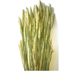 Wheat - Natural Very Lt Green - Beardless - 4oz - ON SPECIAL