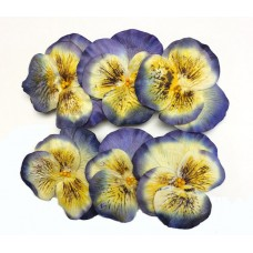 Paper Pansy - 6 per bag - Handmade - Yellow/Blue