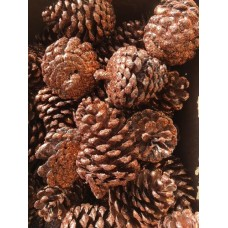 "Pinecones - Copper Glittered - Austrica 2-3½ on 5-6"" picks 100/cs BULK"