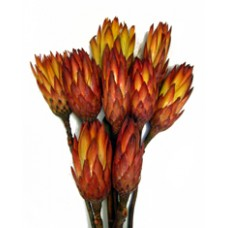 Protea Repens Red  - 5 stems/bunch