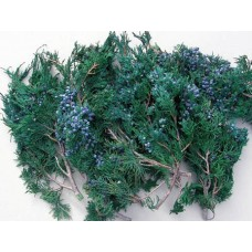 "Juniper ""TIPS"" with Berries-Cedar-1 lb-Preserved (10 lb Case Onl"