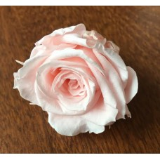 Preserved Rose Heads - Champagne Pink - 8 Per Box