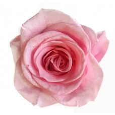 Preserved Rose Heads - Pink - 8 Per Box