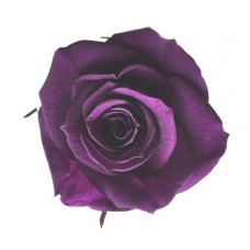 Preserved Rose Heads - Violet - 8 Per Box