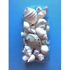 "Sea Shell Assortment-Clear 4"" x 8"" box - Wedding Shells or Design Work"