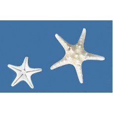Sea Shell - Starfish Natural- White - Approx  2-3""